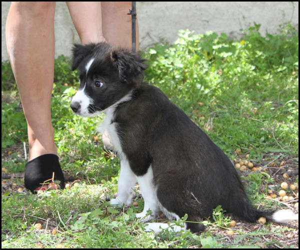 ORPHEE chiot 2 mois à l'adoption Img_8511