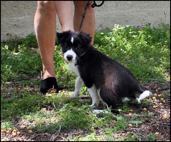 ORPHEE chiot 2 mois à l'adoption Img_8512
