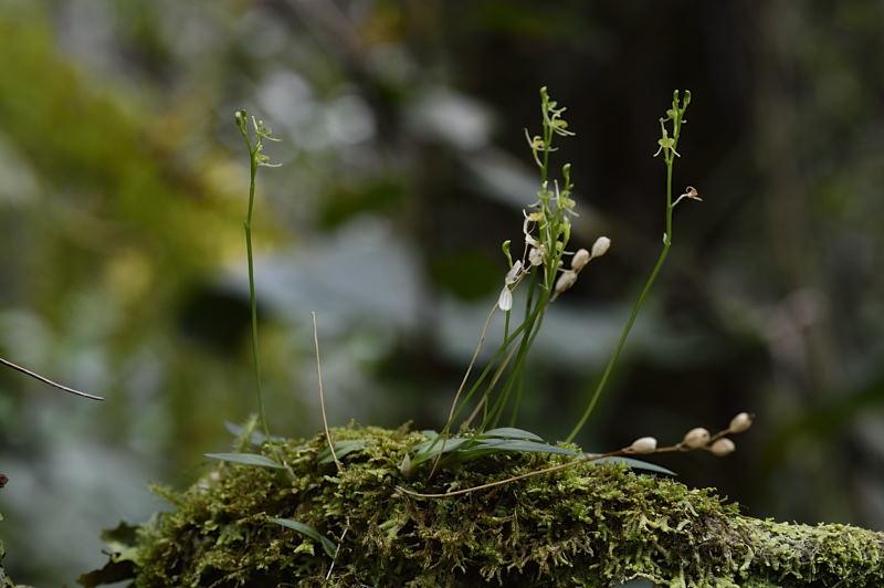 A la faveur de l'automne(copyright) Lipari10