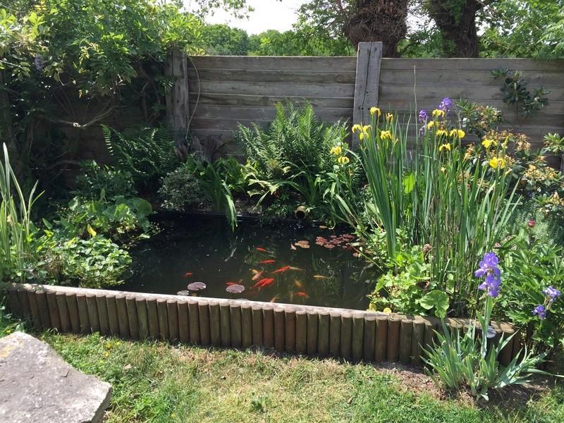 Un bassin au jardin - Page 2 3d77c610