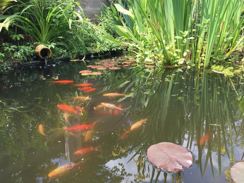 Un bassin au jardin - Page 2 6a848610
