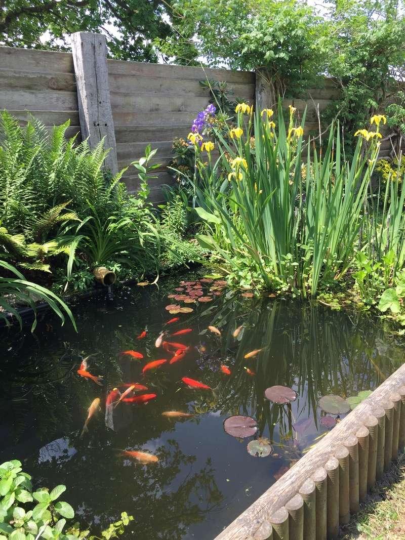 Un bassin au jardin - Page 2 9b9bb510