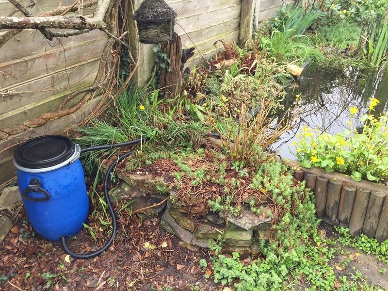 Un bassin au jardin - Page 2 Img_3015