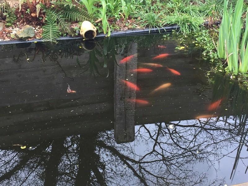 Un bassin au jardin - Page 2 Img_3016