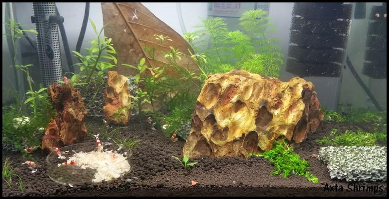[Axta Shrimps] - 30L de PRL. 0311