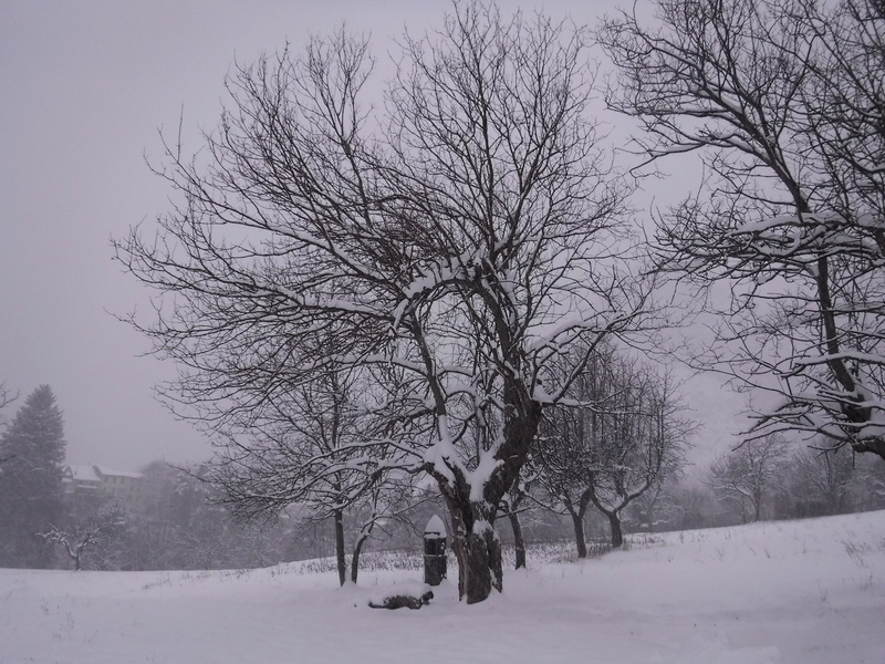 La neige sur mon village Dscf6311