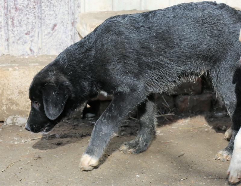 Nox, petit mâle né en octobre 2017  Hx9a4911