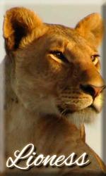 .:Taller de Scar:. Liones11