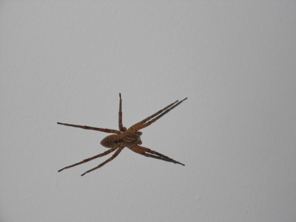 Identifier un insecte Dscn0210