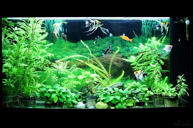 Mes aquariums - Page 3 Img_0112