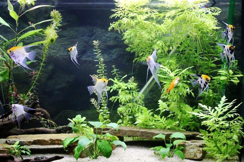 Mes aquariums - Page 3 Img_0113