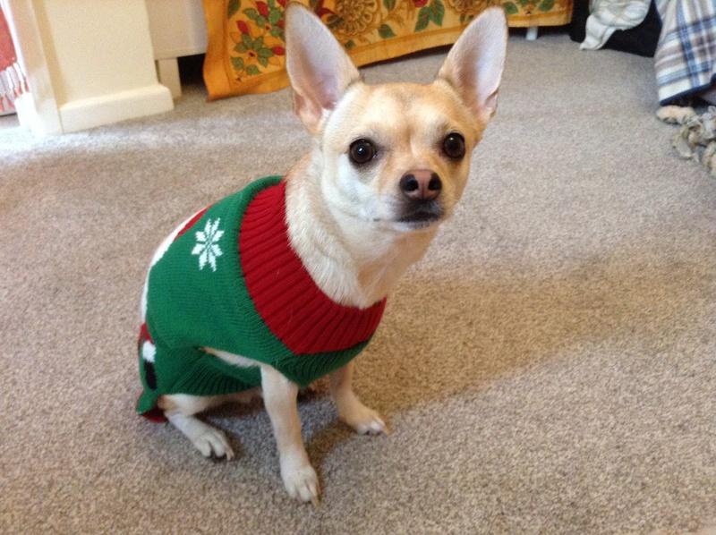 Louie's Christmas Sweater Img_1011