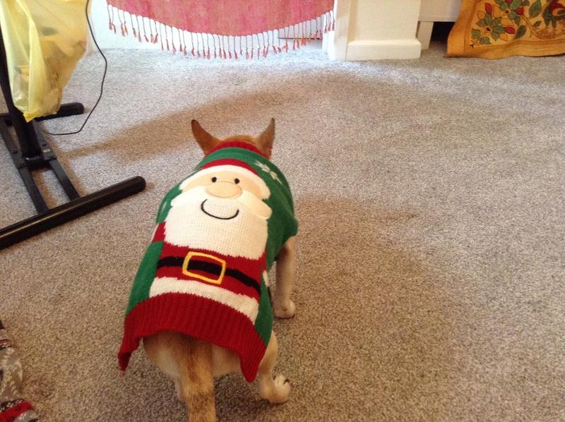 Louie's Christmas Sweater Img_1012
