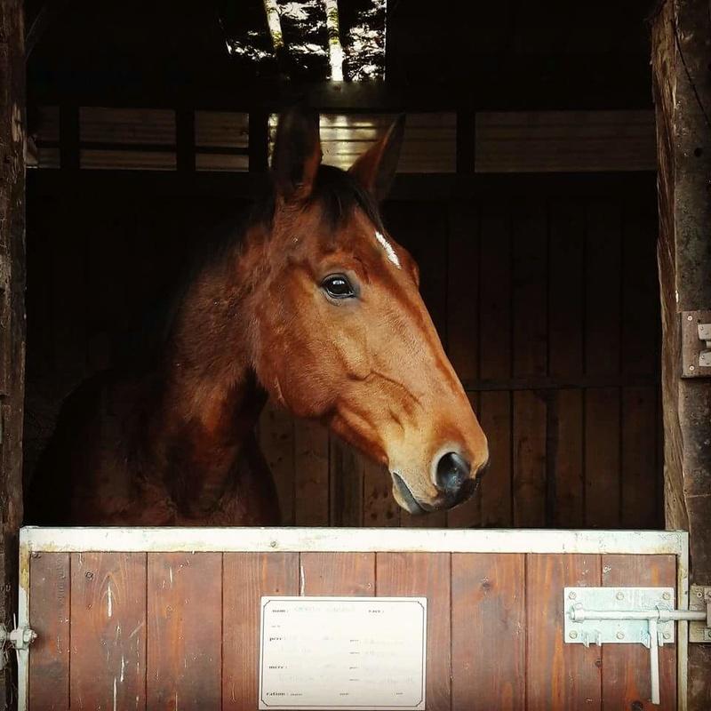 C.A. avec mon prince Roseau (cheval T.F.) Fb_img11