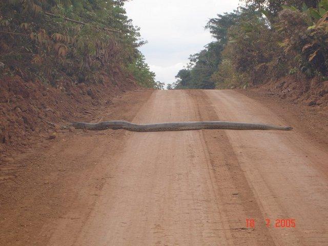 Une autoroute Congolaise 20-ins10