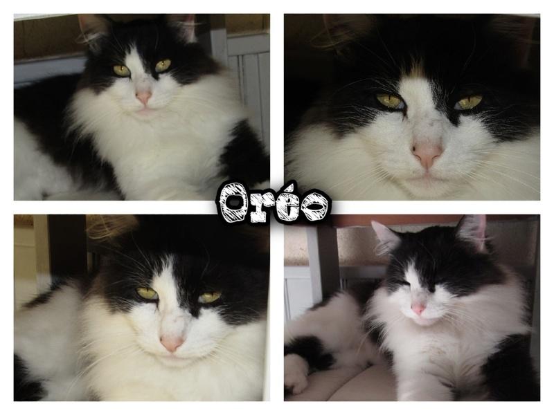 OREO  Oreo_210