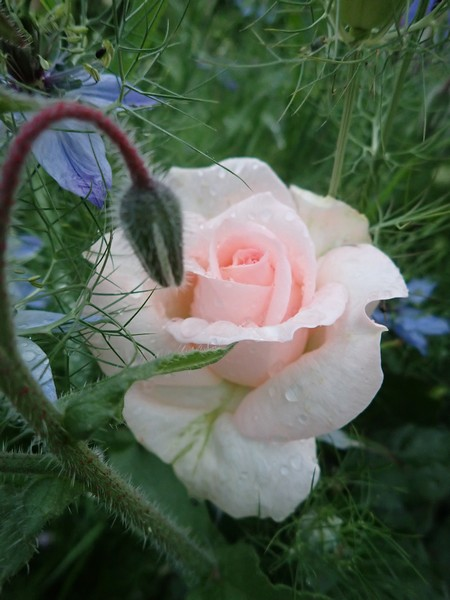 rosier sweet love - Page 2 01_jui18