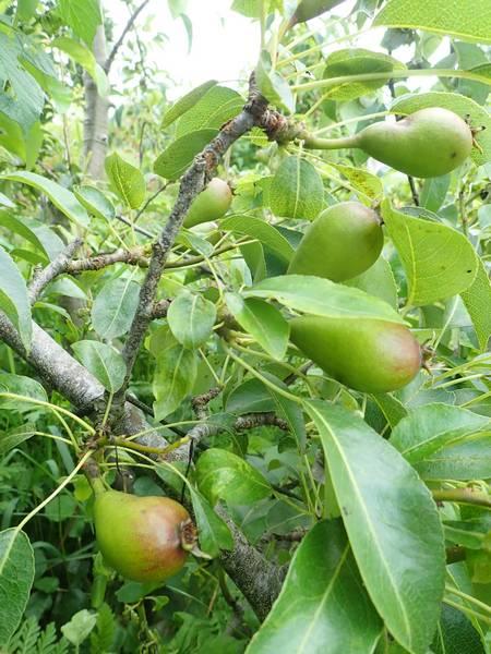 Mes fruitiers Vendre58