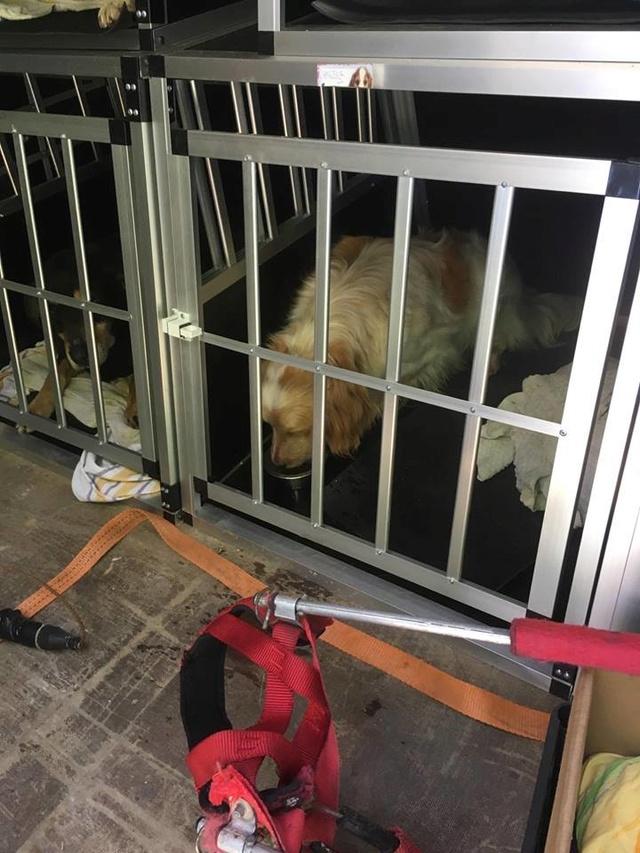Arrivée camion des chiens Serbes de BELLA le 28 avril 2018 - Page 3 Halte_14