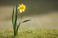[Shimazaki, Aki] Suisen Narcis10