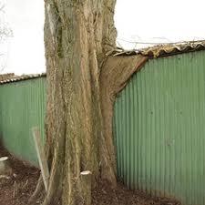 Une cabane dans l'arbre - Page 2 Images11