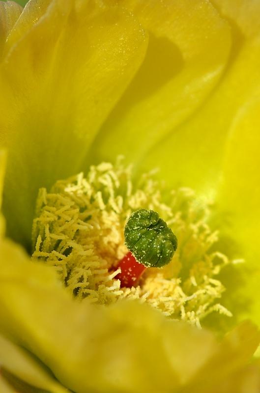 Floraison Dsc_4211