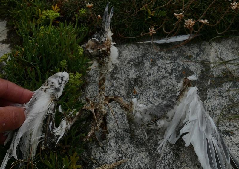 Oiseau à deviner P1320110