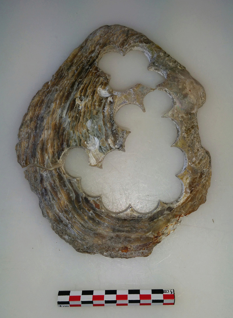 archéologie - Huître à boutons ... 20180516