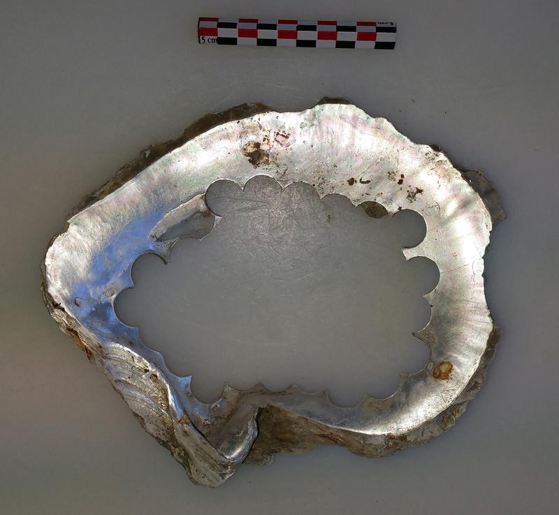 archéologie - Huître à boutons ... 20180518