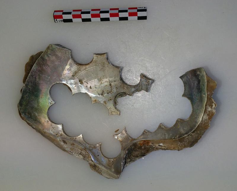 archéologie - Huître à boutons ... 20180519