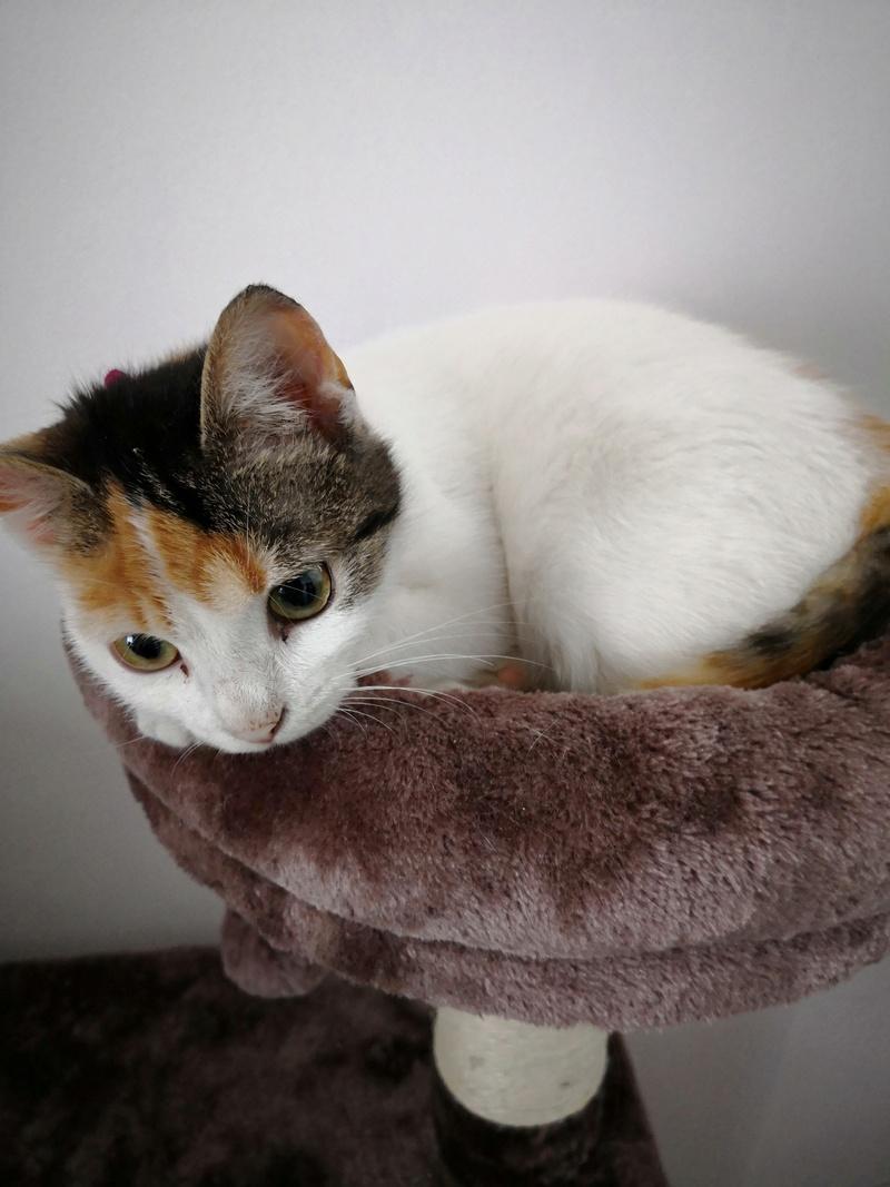 Lyria (ex-Janneke) - femelle - refuge de Târgu Frumos - réservée Adoption (dept 68) Img_2012