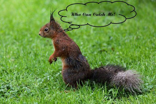Garden Gossip Squirr10