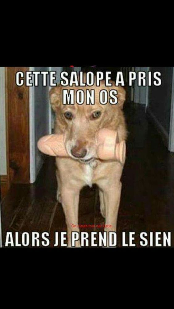 HUMOUR - blagues - Page 19 C02a8d10