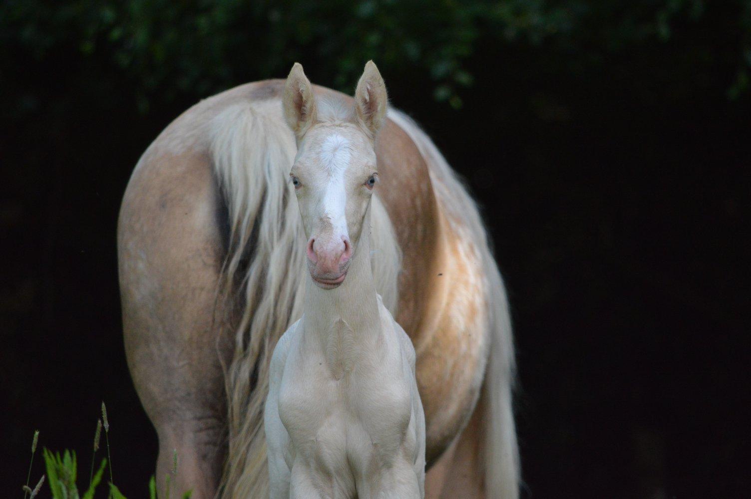 Les chevaux Dorélia  - Page 36 33676610