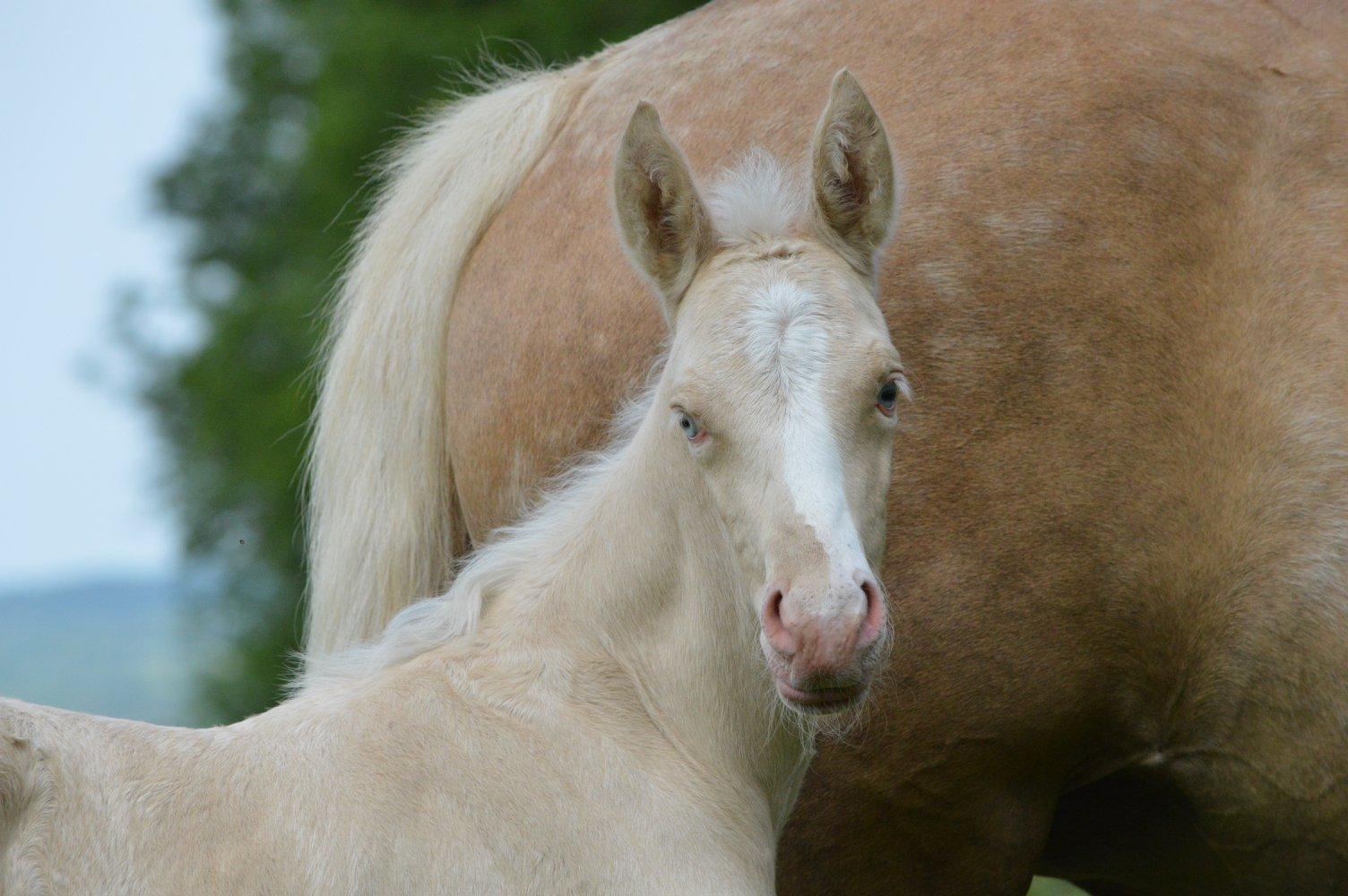Les chevaux Dorélia  - Page 36 33676810