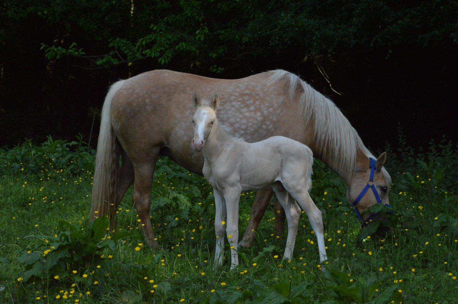Les chevaux Dorélia  - Page 36 33692610