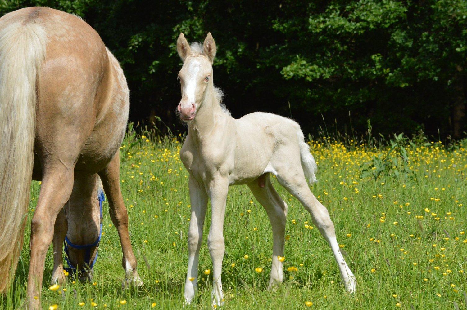 Les chevaux Dorélia  - Page 36 33766210