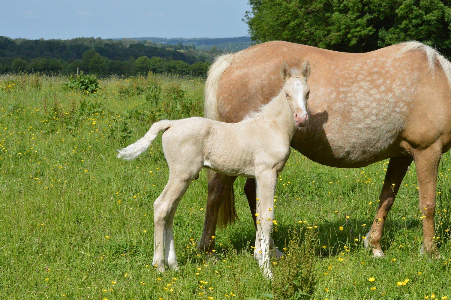 Les chevaux Dorélia  - Page 36 33769710