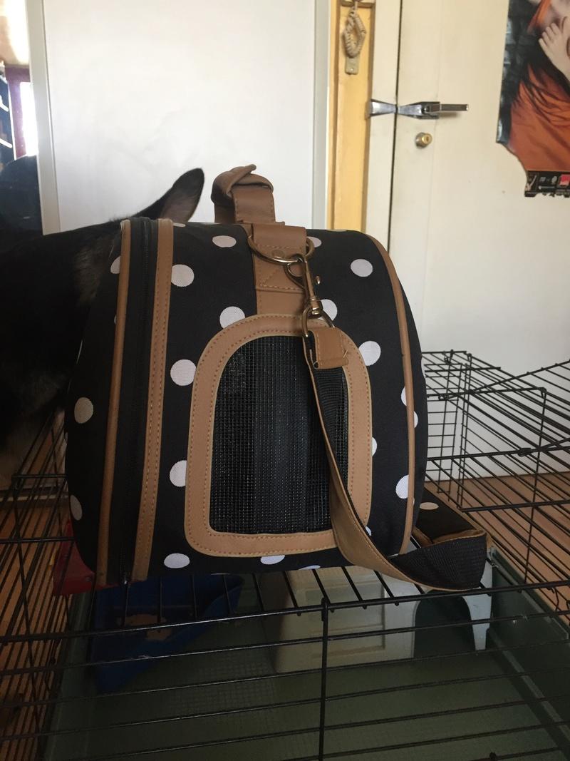 Vends grande cage et sexy sac de transport Paris 75 Img_4911