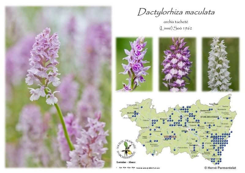Cartographie des Vosges 10_mac10
