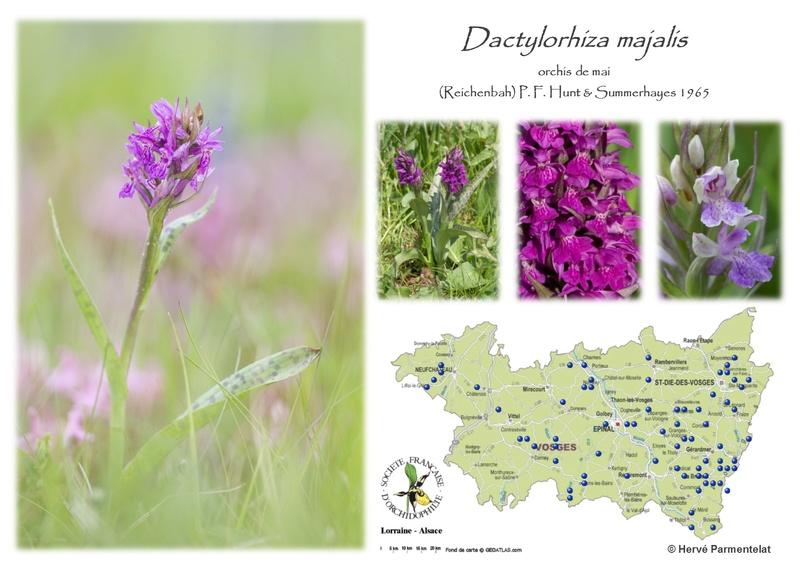 Cartographie des Vosges 11_mja10