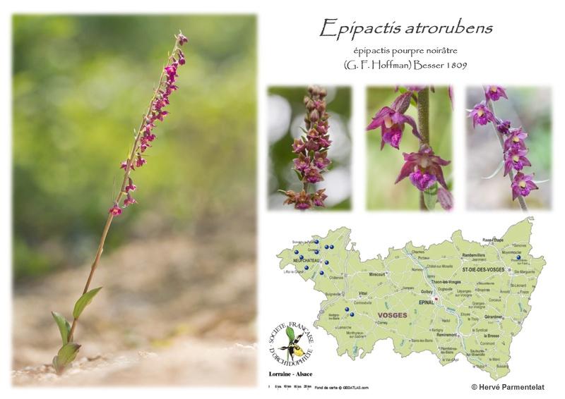 Cartographie des Vosges 13_atr10