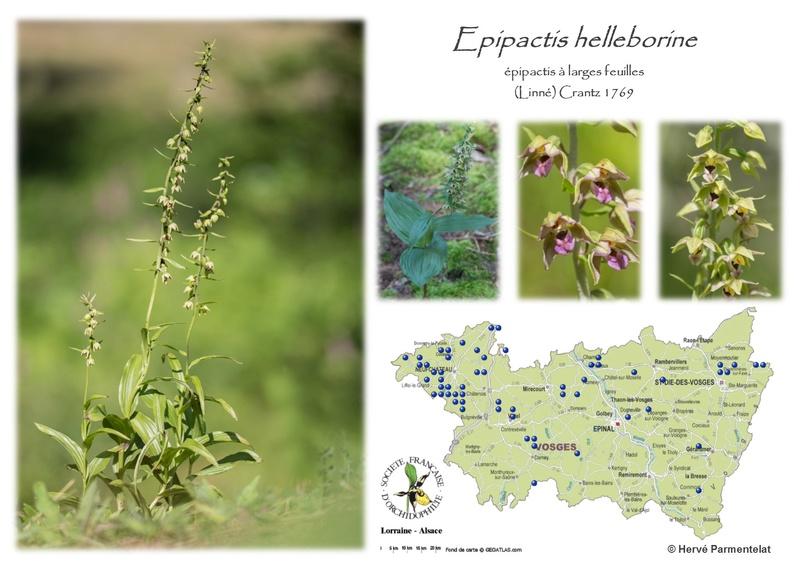Cartographie des Vosges 14_hel10