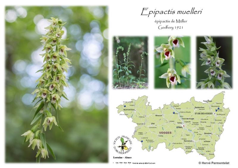 Cartographie des Vosges 17_mue10