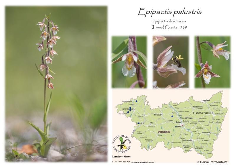 Cartographie des Vosges 18_pal10