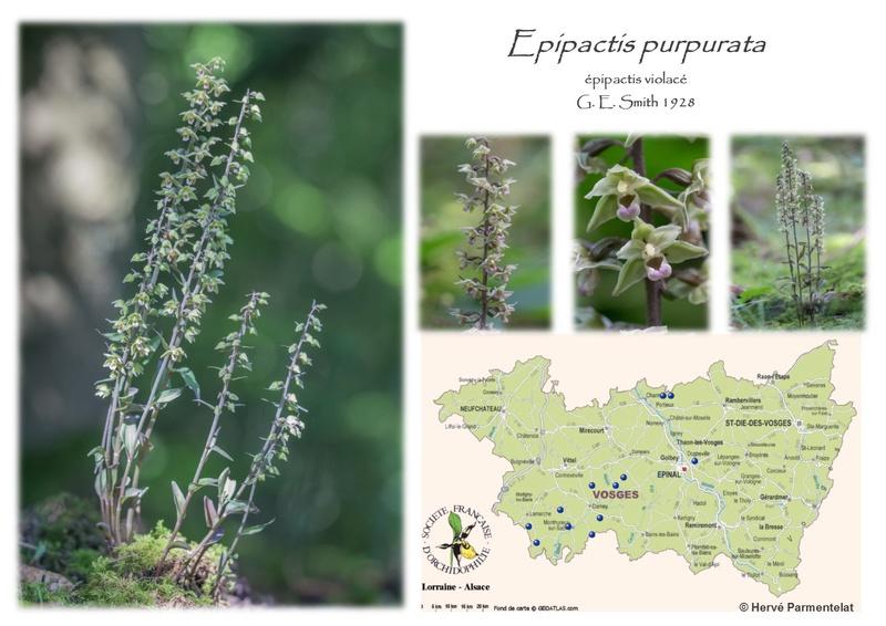 Cartographie des Vosges 19_pur10