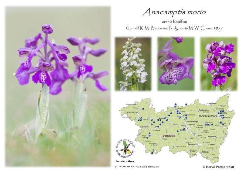 Cartographie des Vosges 1_mori10