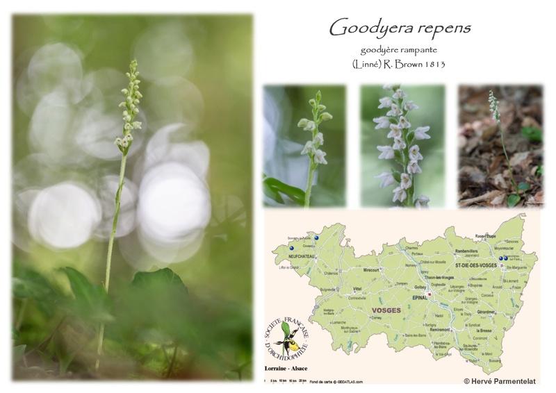 Cartographie des Vosges - Page 2 20_rep10