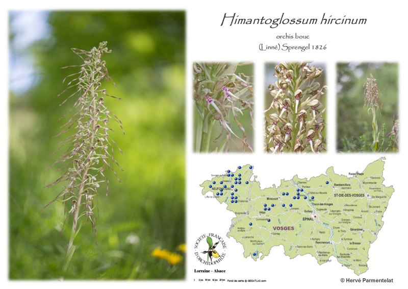Cartographie des Vosges - Page 2 24_hir10