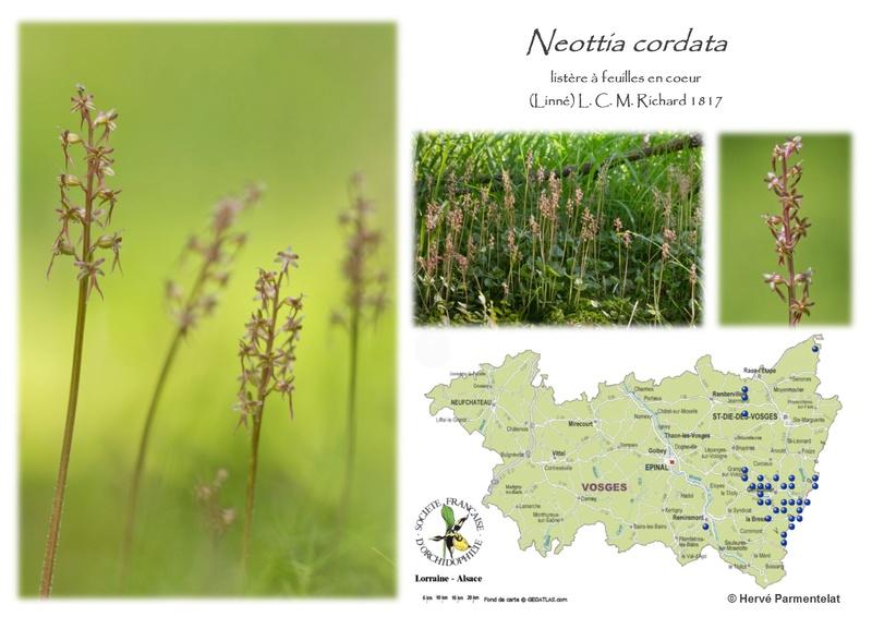 Cartographie des Vosges - Page 2 26_cor10